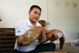 Captura impresionanta a unui padurar chinez. A prins un animal preistoric, care dateaza din perioada Jurassicului