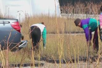 Afinele americane care imbogatesc fermieri romani. Profituri de zeci de mii de euro pe hectar: care este reteta succesului