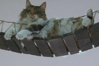 Muzeul pisicilor vii din Singapore. Vizitatorii se pot juca cu micile feline si le pot chiar si adopta