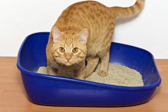 Accident nuclear in SUA din cauza nisipului pentru pisici. Armata americana, nevoita sa foloseasca bombe atomice invechite