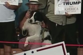 In America si cainii ar vota cu Trump. Ce i-a facut un american cainelui sau, in cadrul unui eveniment electoral