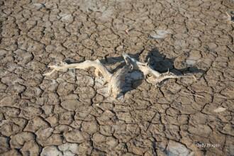 Tara care a declarat stare de catrastrofa naturala din cauza secetei. 2 milioane de oameni au nevoie de ajutor umanitar