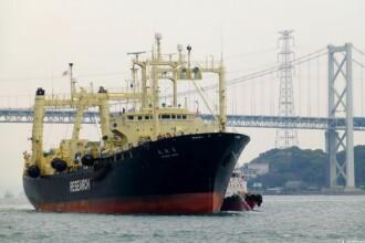 Japonia a vanat 333 de balene in Antarctica, sub pretextul