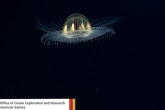 Meduza care seamana cu un OZN, foarte rara, filmata de cercetatori in Pacific. VIDEO