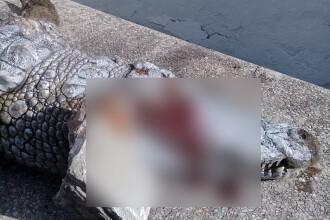 Crocodil ucis de vizitatori, la gradina zoologica din Tunis. Directorul da vina pe elevii in vacanta