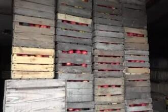 Situatie disperata pentru producatorii de mere. Depozitele sunt pline cu tone de fructe, insa nu le cumpara nimeni
