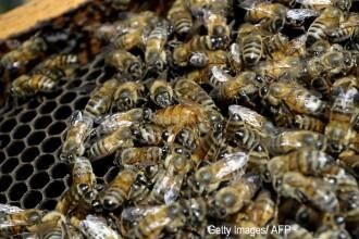 O batrana de 84 de ani a fost intepata de sute de albine. Cum arata corpul ei dupa tragicul incident. FOTO