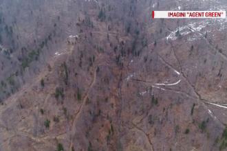 În timp ce pădurile țării dispar, ministrul Pană vrea să închidă Inspectorul Pădurii