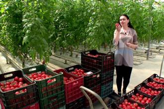 Cum cresc rosiile ecologice din Romania cu ajutorul muzicii.