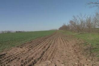 Un judet din sudul Romaniei se transforma rapid in deşert. Autoritatile planteaza copaci, dar se usuca in cateva luni