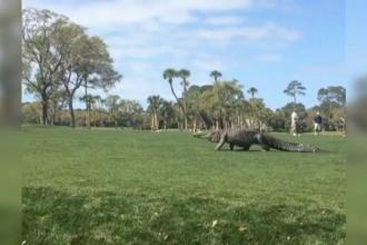 Un aligator urias a aparut pe un teren de golf chiar in timpul unui turneu. Reactia oamenilor. VIDEO