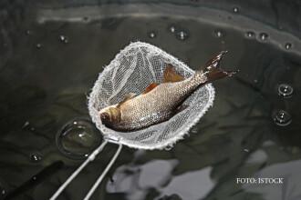 Care este cel mai sanatos peste din apele Romaniei. Grasimea lui reduce colesterolul si protejeaza inima