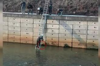 Câine salvat de pompierii din Baia Mare după ce a căzut într-un râu
