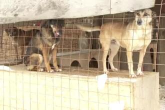 5 câini de la un adăpost au murit de frig. Apa și mâncarea îngheață în boluri