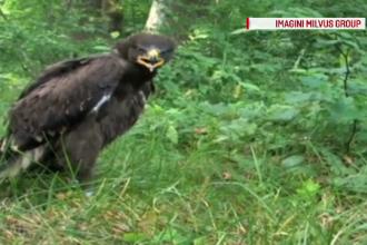 Europenii ne dau 1 miliard de € ca să salvăm păsări pe cale de dispariție
