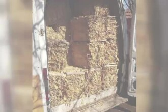 Percheziții la 30 de adrese, într-un dosar privind trafic cu tutun de contrabandă