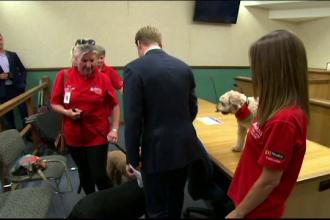 Un tribunal din Australia folosește câini pentru a îi detensiona pe cei care depun mărturie