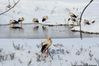 Cum putem salva berzele de frig. Semnul care arată că aceste păsări au nevoie de ajutor