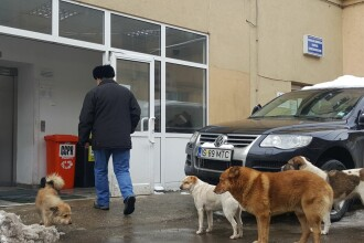 Câini maidanezi fotografiaţi printre pacienţi, în curtea celui mai mare spital din Moldova