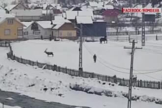 """Cazul cerbului care s-a """"împrietenit"""" cu un cal. Wild Bucovina susține că a fost ucis, Romsilva neagă"""