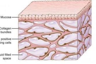 Un organ nou a fost descoperit în corpul uman. Rolul pe care îl are în răspândirea cancerului