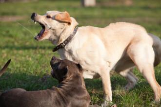 Femeie din Arad atacată de o haită de câini în plină stradă. Reacția primarului