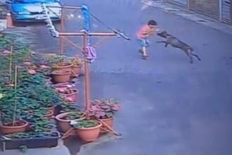 Ce a pățit un copil de 7 ani care a încercat să hrănească cu biscuiți un pitbull de pe stradă