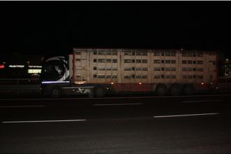 Ororile găsite în camionul unui român de poliţiştii italieni