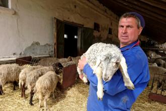 Fermierii din Bulgaria sunt nemulțumiți din cauza mieilor din România, cu ocazia Paștelui