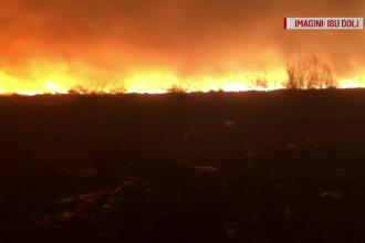 20 de hectare de vegetație au luat foc în Dolj. Ce au găsit pompierii pe câmp