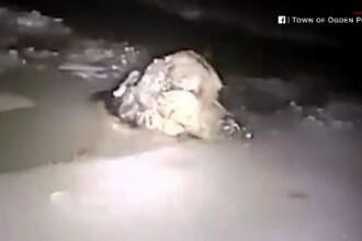 Un polițist inimos și-a riscat viața ca sa salveze din apă un cățel de la îngheț