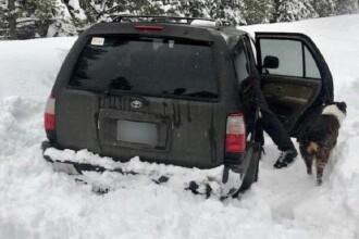 Cum au supraviețuit un bărbat și câinele său, blocați 5 zile într-o mașină