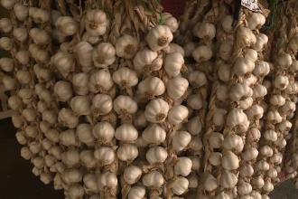 """Programul """"Usturoi 2019"""": 40 de fermieri din Botoșani au cerut sprijin financiar"""
