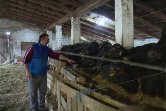 Animalul care dă lapte şi carne mai bune decât cele de vacă, dar nu e