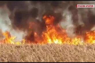 Incendiile de vegetație, un pericol tot mai mare. Autorii, greu de găsit