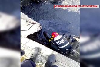 Momentul în care 3 căței sunt salvați dintr-un bazin cu smoală, la Timișoara