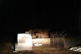 Pui de urs, blocat într-un tomberon, la Băile Tuşnad. Cum a reacționat ursoaica