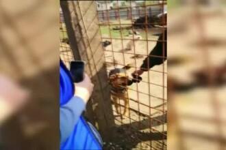 Încă un scandal cu câinele bătut într-un tramvai din București. Acuzații la adresa autorităților