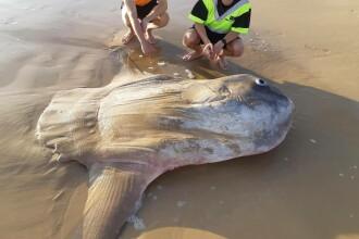 Descoperire rară pe o plajă din Australia. Cântărea mai mult decât o mașină
