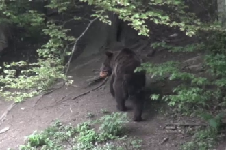 A murit după ce l-a atacat un urs. Bărbatul își creștea singur cele două fetițe