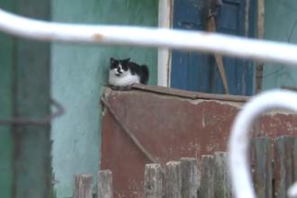 Satul din Moldova unde a mai rămas doar o pisică. Ultimii localnici s-au ucis între ei