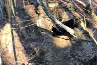 Gestul stupid pe care l-ar fi făcut bărbatul de 35 de ani, ucis de urs
