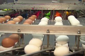 Mașina pentru vopsit ouă. Afacerea care i-a adus bani și faimă unui bărbat
