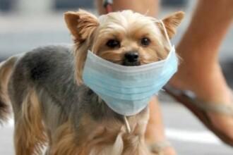 """Primul caz de coronavirus la animale? Câine """"ușor pozitiv"""", plasat în carantină"""