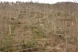 Copacii care au rămas în picioare după vijelia din Prahova sunt în pericol, din cauza insectelor
