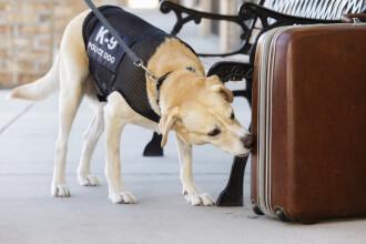 Specialiștii din Marea Britanie vor să dreseze câinii pentru a depista coronavirusul