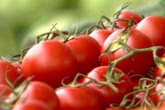 Se extinde programul ''Tomata''. Ce noi legume vor fi incluse