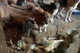 O femeie din Suceava trăia alături de 14 câini și 3 pisici într-o locuință total insalubră