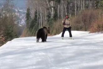Momentul în care un urs urmăreşte un schior, pe o pârtie din Predeal. Experţii au făcut