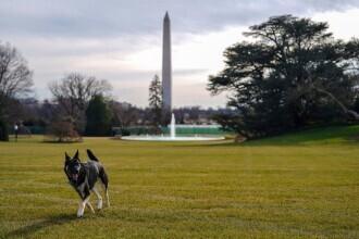 Câinii lui Joe Biden, alungați de la Casa Albă, după ce unul dintre ei a mușcat un agent de pază